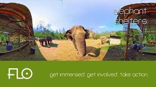 001 - Elephant Shelters