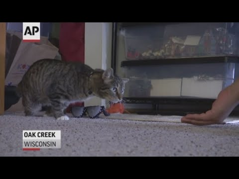 Tabby cat gets new back legs, with the help of some University of Wisconsin-Madison students and a 3-D printer.  (May 3 )