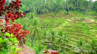 Bali Video Travel Guide | Expedia Asia