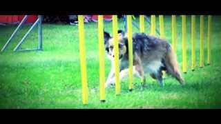 DARE TO WIN [Agility] Inspirational video - 10