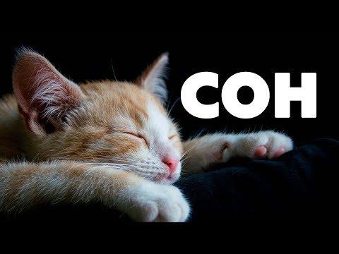 , title : 'СОН. Как улучшить качество сна.'