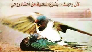 تحميل اغاني اسلام -( طير جريح ) اغنيه روعه نادره جدا MP3