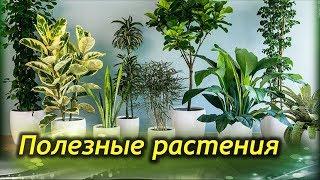 Самые ПОЛЕЗНЫЕ комнатные растения для вашего дома!