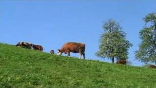 preview picture of video 'Frühling im Schuttertal, Schwarzwald Mitte/Nord. Ortenau'