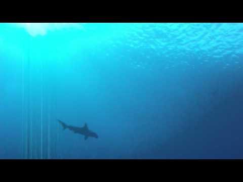 Die großen Fische, Daedalus Riff,Ägypten