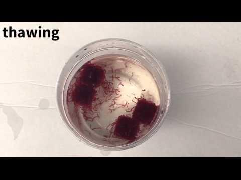 Gamot laban sa parasites intoksis analogues