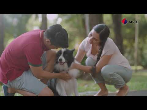 mp4 Insurance Msig, download Insurance Msig video klip Insurance Msig