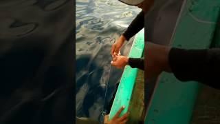 Teluk Saleh...mancing Mania....