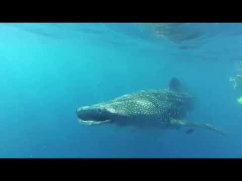 Mexico Best of Diving Yucatan