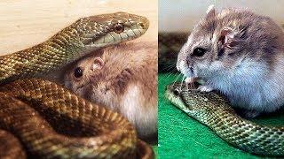 10 Friendship Between Animals You Won't Believe Exist 🐀🐍