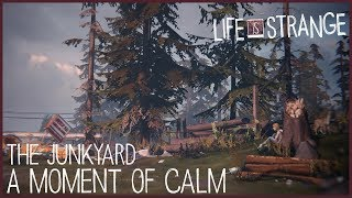 A Moment of Calm - The Junkyard