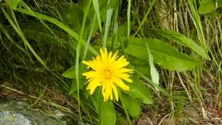 Fauna i Flora Tatr