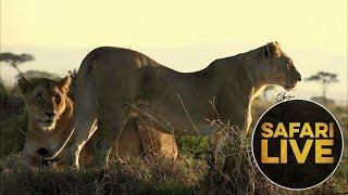 safariLIVE: The Gauntlet - Episode 3 - August 11, 2018