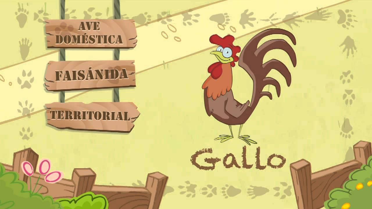Las características del GALLO
