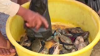 Thương trường muôn mặt: Trục lợi từ hải sản giá rẻ