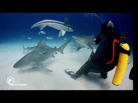 Scuba diving in cancun Mexico