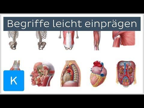 Wie man sich antomische Begriffe leicht einprägt - Anatomie des Menschen |Kenhub