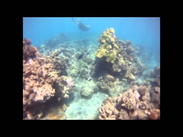 Diving in Hawaii Coral Reef (Underwater Footage)