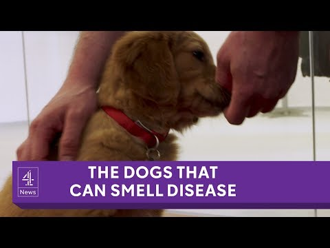 Watch Medical Dogs Being Trained at Home