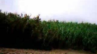 preview picture of video 'mzita'