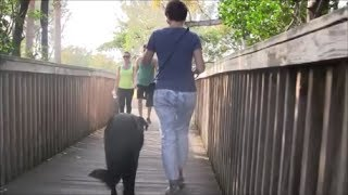 REAL LIFE dog training that everyone is trying to achieve!