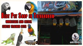 Pet Shop In Trivandrum With Exotic Birds  | Kerala