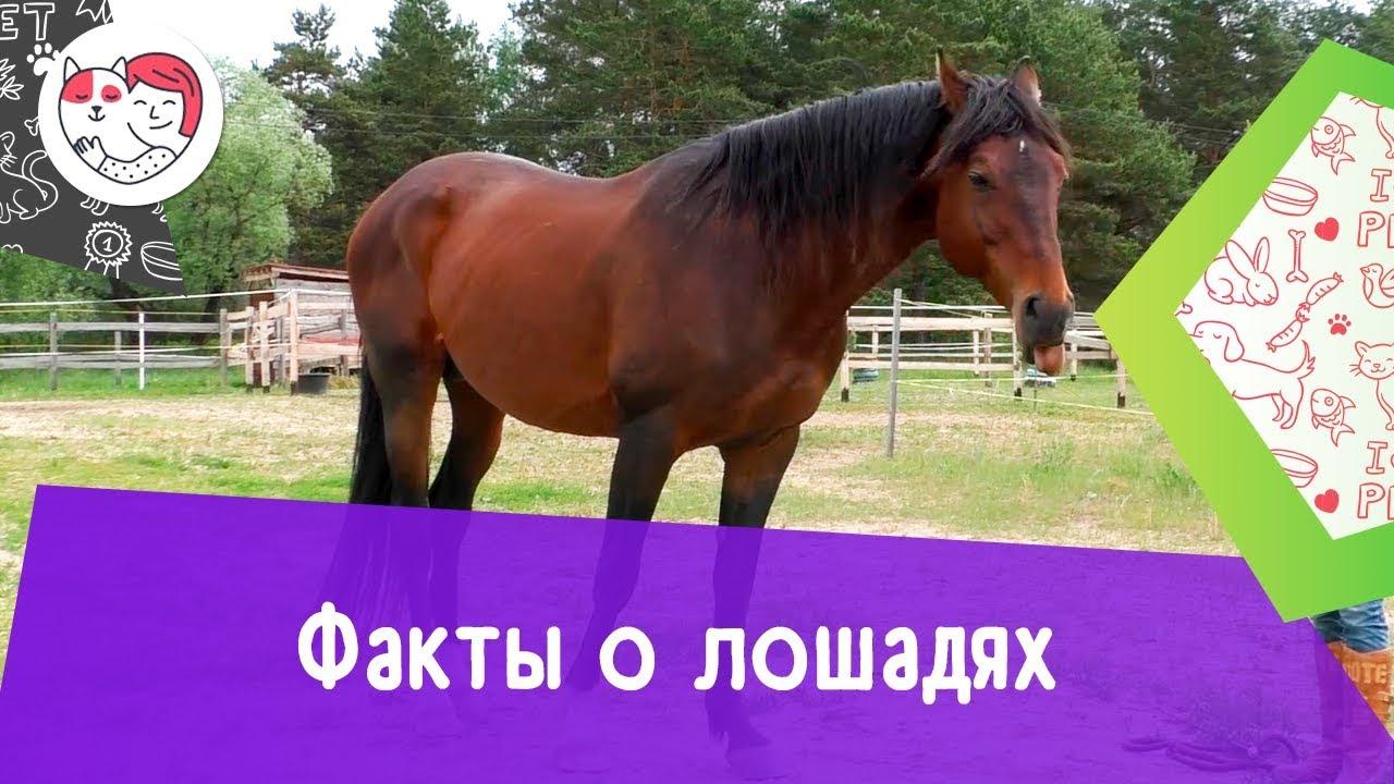 5 необычных фактов о лошадях