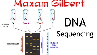 DNA SEQUENCING BY CHEMICAL METHOD DOWNLOAD