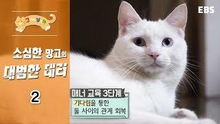 고양이를 부탁해 - 소심한 망고의 대범한 테러_#002