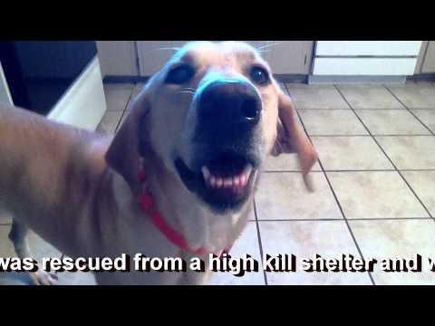 Sintomi filariosi cane