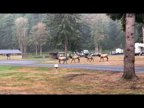 Woke up to Elk in the campground