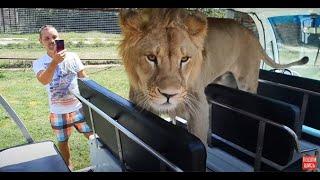 Ну  лев  Филя и  ОТЧУДИЛ !!!  Выгнал всех !!!