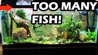 DON'T DO THIS  No Maintenance Tank Update- Overstocked Aquarium
