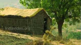 Agricultural Village near Pandharpur, Maharashtra