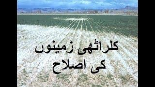 Kalarathi Zameeno ki islaah – کلراٹھی زمینوں کی اصلاح – Soil Salinity Issues and Solutions