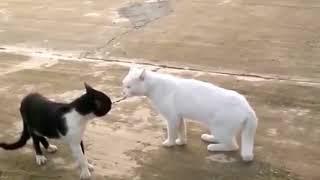 ЛУЧШИЕ ПРИКОЛЫ с котами 2018 Самые смешные видео про кошки и коты Подборка приколов за февраль 2018