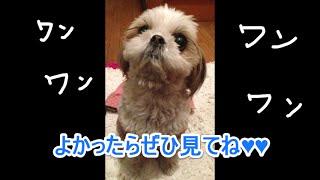 爆笑ワンちゃん!~ちょっぴりドジでキュンとする犬たちのGIF動画集~いぬイヌdog