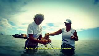 BRASIL CIDADAO - Video Sr. MUNDINHO
