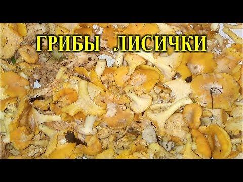 Видео про глистов у человека