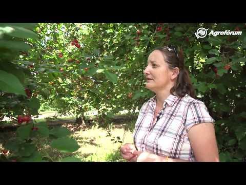 Humán papillomavírusfertőzés esszé