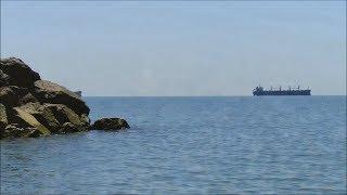 Чёрное море история и интересные факты Обитатели Черноморской банки