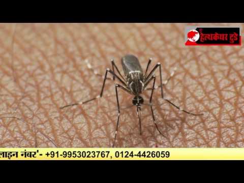 सावधान!! डंक मारने को तैयार है चिकनगुनिया और डेंगू के मच्छर..I