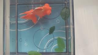 ひかりと水のカラクリ金魚デメキン