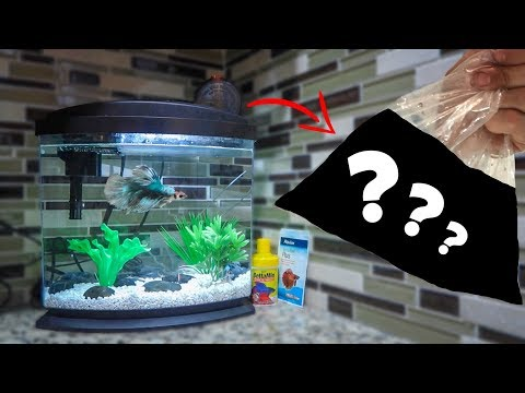 NEW BETTA FISH TANK MEMBERS!!!