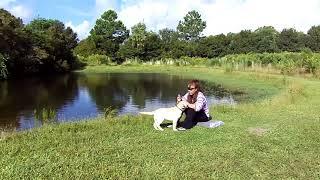 Copy of Puppy Training PUPPY E COLLAR PAGER Labrador TRUFFLES Dogtra IQ
