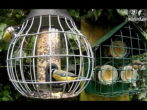 Great Tit & Robin