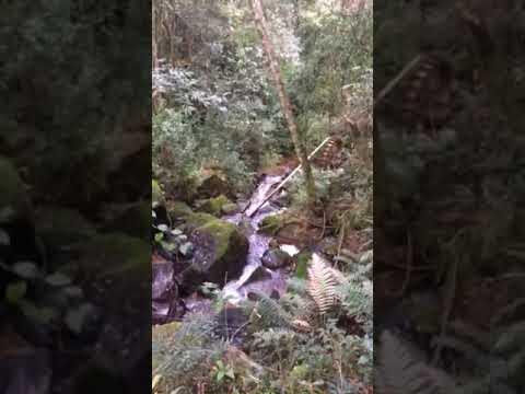 Vídeo chacara potreirinho - bocaiuva do sul