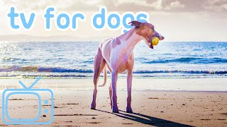 TV for Dogs to Watch! How to Relax My Dog with Seaside TV + Music! NEW