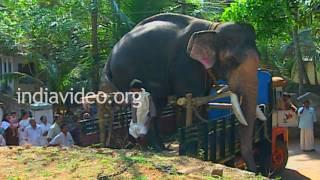 Guruvayoor Padmanabhan, the legendary elephant