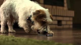 Собака утащила iphone